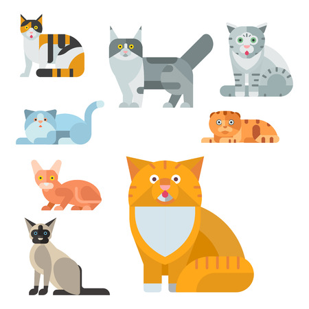 Cats vector illustration cute animal funny decorative characters color abstract feline kitten domestic trendy pet drawn. Happy mammal fur adorable kitty breed.