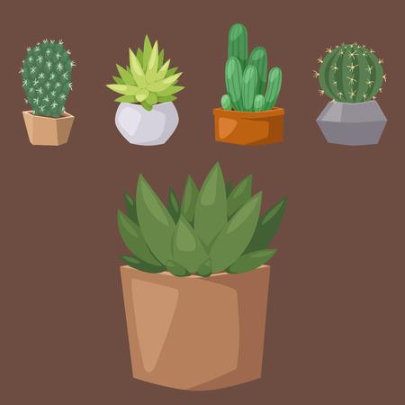 Cactus nature desert flower green mexican succulent tropical plant cacti floral vector illustration.
