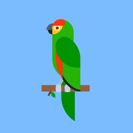 Parrot green bird breed species animal nature tropical parakeets education colorful pet vector illustration Illustration