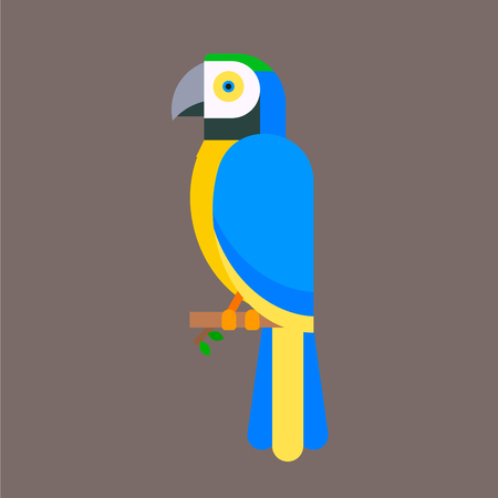Parrot bird blue breed species animal nature tropical parakeets education colorful pet vector illustration