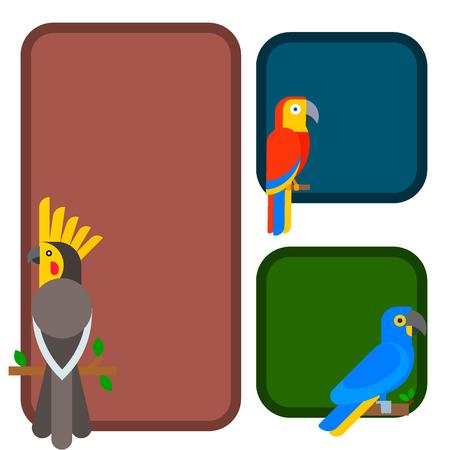 オウム鳥品種動物クフパンフレット自然熱帯インコ教育カラフルなペットベクターイラスト