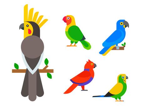 オウムの鳥繁殖種動物の性質熱帯のインコ教育カラフルなペット ベクトル図