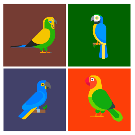 Set of parrots birds, breed species, brochure, nature, in colorful pet illustration.