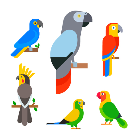 Parrots birds  illustration