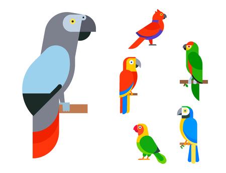 Parrots birds breed species and animal nature vector illustration. Ilustracja