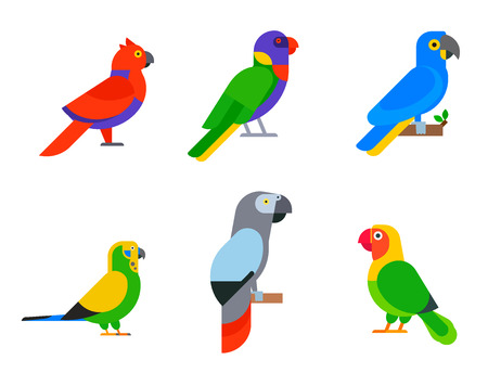 Parrots birds breed species vector illustration