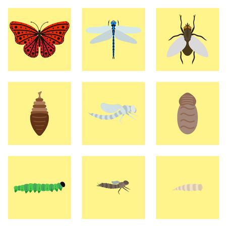 번데기 나비 4 단계에서 신흥 잠자리 비행 곤충 출생 생활 벡터 변경 버그에 대 한 놀라운 순간.