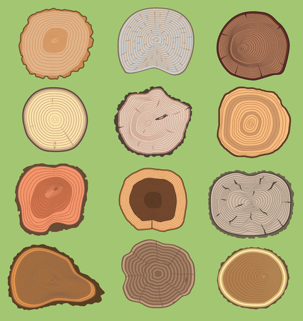 Wood slice texture wooden vector tree life age circle rings cut tree material. Set of tree slices wooden trunk natural timber. Slice of tree trunk. Aging round wood pattern ring, isolated bark circle.
