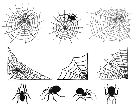 Spiders vector web silhouette.
