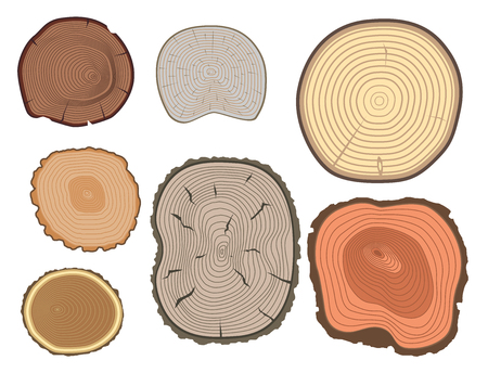 Tree wood trunk slice texture circle cut wooden raw material vector detail plant years history textured rough forest tree top.