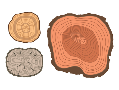 Tree wood trunk slice texture circle cut wooden raw material vector detail plant years history textured rough forest. Circular tree trunk growth industry environment illustration.