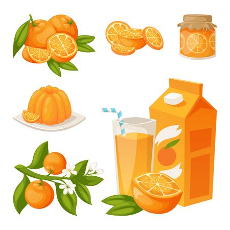 Las naranjas y los productos de naranja vector ilustración cítricos naturales vector jugoso postre tropical belleza jugo orgánico alimentos saludables.