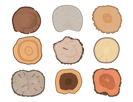Set of the top of tree trunks texture