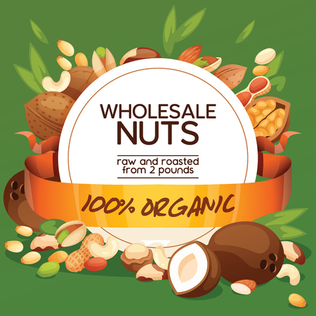Nut vector nutshell of hazelnut walnut and almond nuts backdrop organic food nutrition with cashew peanut and chestnuts nutmeg illustration background banner.