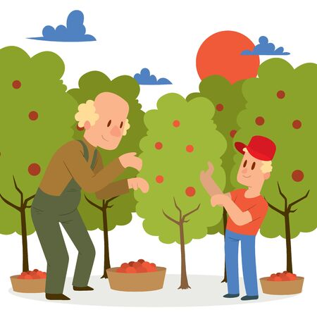 Farmer picking apple harvest to baskets banner vector illustration. Young and old male character harvesting ripe fruit from organic tree. Country garden landscape with sunset.