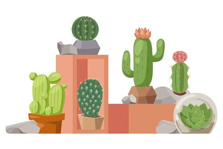 Cactus houseplant, vector illustration. Collection of decorative cacti in flowerpots. Exotic plants shop presentation, article about tropical succulents, botanical flora exhibition. Cactus book cover
