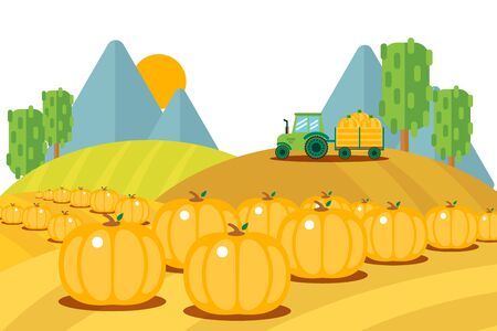 Field harvesting fruits set, ripe pumpkins bunch outside vector illustration. Tractor with trailer carries harvested vegetables to farm. Hilly sowing area for growing cartoon product, agriculture.