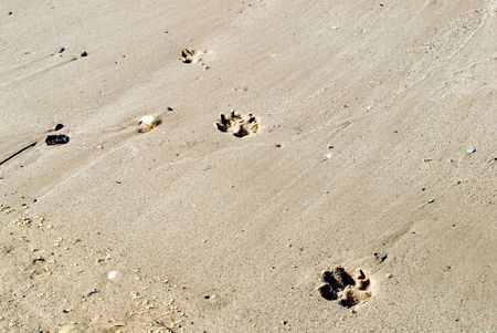 Background traces of a dog on wet sand photo