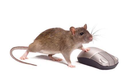ratty: Ratto e il mouse su uno sfondo bianco Archivio Fotografico
