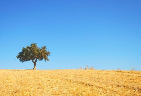 Summer landscape - yellow field, green tree, the dark blue sky Stock Photo - 3269918