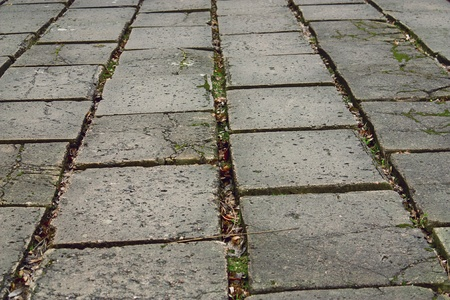 old gray paving slabs covered with grass photo