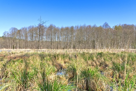 Swamp landscape with blue sky and green grass Stock Photo - 14206738