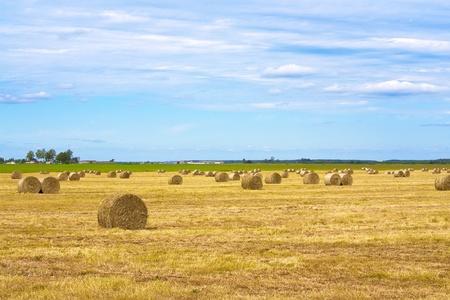 rick: Harvest on the field and stacks of straw