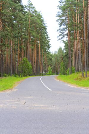 Highway in a pine forest and the intersection photo