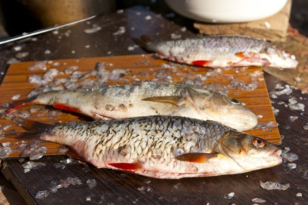 Cooking fresh fish on a fishing trip Stock Photo - 14469498