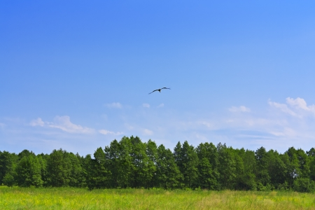 A bird flying over a forest green grass and blue sky