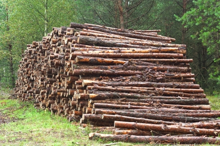 A lot of sawn timber lying in the woods Stock Photo