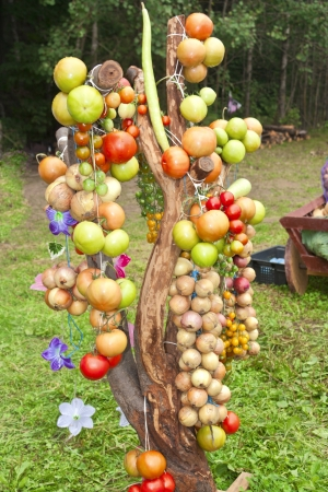 Vegetables bound in a bundle hanging from the tree photo