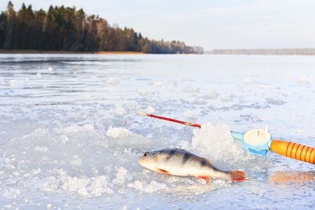 Fishing rod and caught fish lying on ice Stock Photo - 17358804