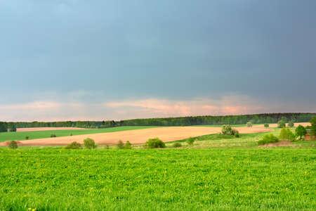 horisontal: Green field and beautiful sky horisontal