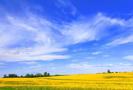 skyscape: Blooming campo de canola y hermoso horisontal skyscape Foto de archivo