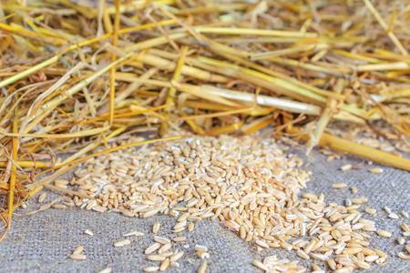 scattered: Grains and straw scattered on the table