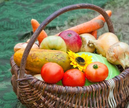 Harvesting of fruit and vegetables in the autumn
