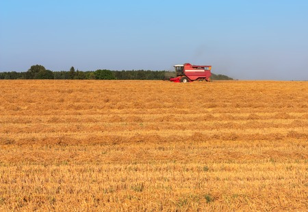 field work: Harvesting wheat in August horizontal. Agricultural landscape