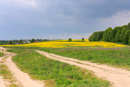 Route rurale à travers un champ de nuages ??de colza et de nuages ??orageux Banque d'images - 59641080