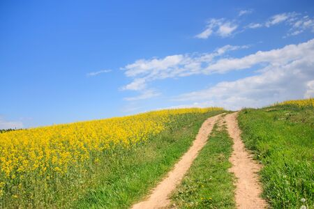 Rural road through a field of rapeseed and blue sky landscape Stock Photo