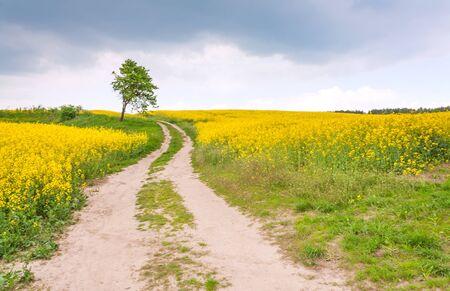 Route de campagne à travers un champ de colza, ciel dramatique et arbre solitaire Banque d'images - 59481094