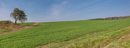 Summer rural landscape a panorama with a field and the blue sky. Agriculture in Belarus