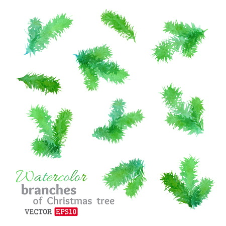 pine boughs: Set of vector design elements isolated on white background. Illustration