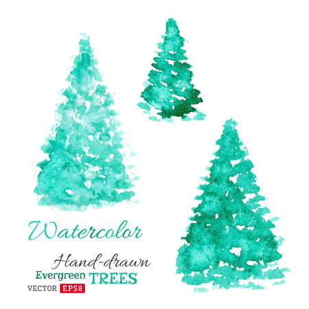 evergreen trees: Hand-drawn spruce isolated on white background.