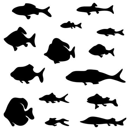 herring: Black fish silhouettes isolated on white background. Illustration