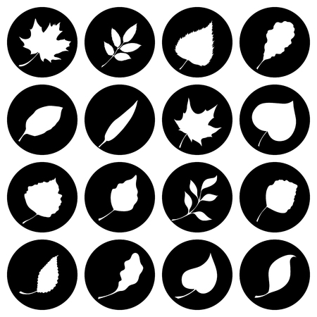 flora  vector: Leaves silhouettes. Black and white design. Illustration