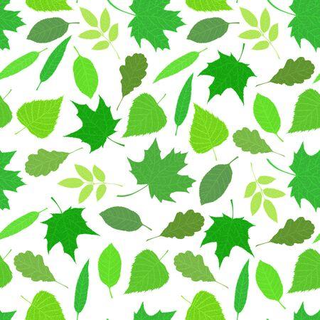 흰색 배경에 다양 한 veined 나뭇잎입니다. 일러스트