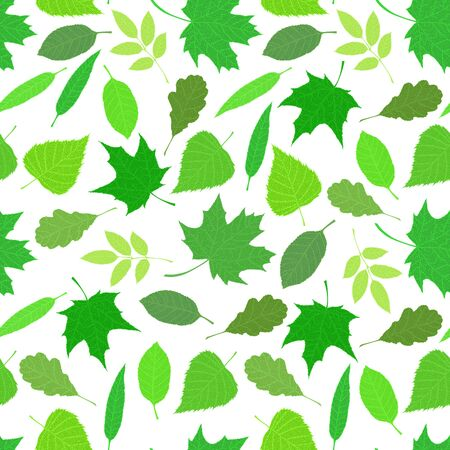 Various veined leaves on white background. Vector