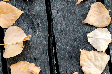 Yellow autumn leaves on the background of wooden old and rotten boards