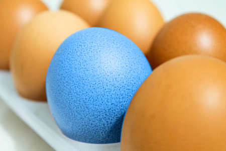 A blue chicken egg among the usual eggs in a tray.